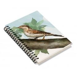 Cuaderno de Campo Torcecuello