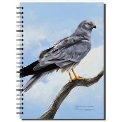 Cuaderno de Campo Aguilucho Cenizo