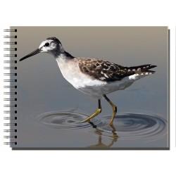 Cuaderno de Campo Andarrios Bastardo
