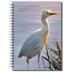 Cuaderno de Campo Garcilla Bueyera