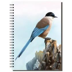 Cuaderno de Campo Rabilargo