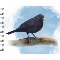 Cuaderno de Campo Mirlo
